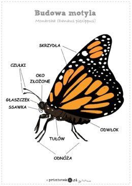 12.05.2020r. –  Mieszkańcy łąki – motyl. Poznajemy sześcian – fb relacje