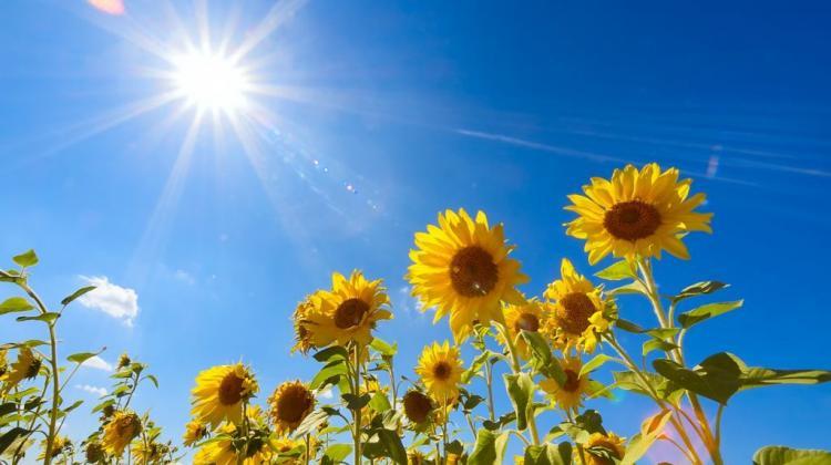 15.06.2020r   Nadchodzi lato- kwiaty.