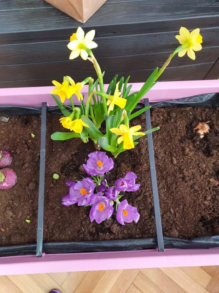 Czarujemy wiosnę – kącik przyrody – 3.02.2021r.