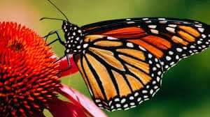 Motyle jak latające kwiaty. – 7.04.2021r. – fb